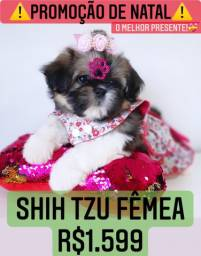 Maravilhosa Promoção Shih tzu fêmea mini 1.599