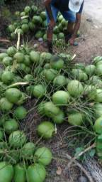 Coco Verde da Paraipaba