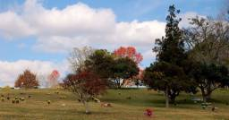 Jazigo no Cemitério Parque Iguaçú