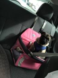 Cadeira cachorro
