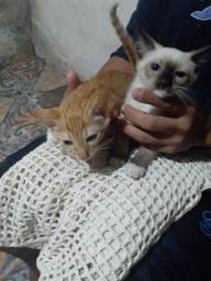 Doação de gatinhos 3 messes de vida