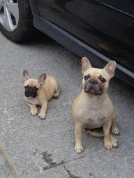 Título do anúncio: Filhote de Bulldog Francês