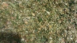silagem de milho ensacada