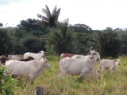 Fazenda na Alça com 250 Melori