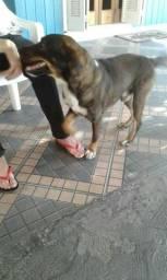 Faça uma boa ação, adote esse lindo cachorro que precisa de um lar