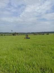 Fazenda à venda, 670 hectares por R$ 7.100.000- Guajará-Mirim/Ro