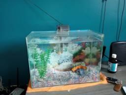 Pra vende no precinho aquário com a bomba