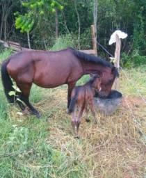 Vendo égua com o filhote de 3 meses