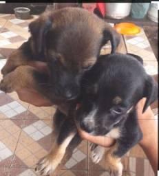 Estou doando  essas 2 cachorrinha