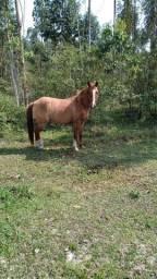 Título do anúncio:  paint horse com manga larga
