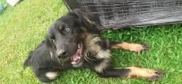 Estou doando um cachorro raça Border collie. Para alguém que cuide bem!