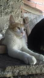 Gatos angora para doação