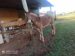 Burro ( troco em gado )