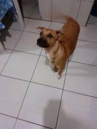 Cachorro porte medio