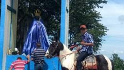 Cavalo pampa marcha picada