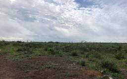 Arrendamento de Fazenda em Mato Grosso
