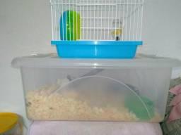 Vende-se topolino macho + casinha