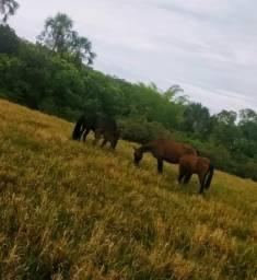 Fazenda 198 Alqueires(950 hectares)- Formosa/Goiás