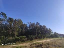 Terreno com muitas árvores p quem gosta da natureza