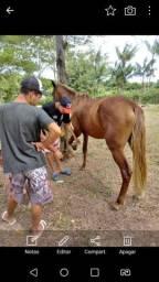 Cavalo alazao