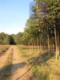Contenda Chácara  59.000 m²    Desperte a sua imaginação     CH0153