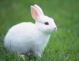 Doação de filhotes de coelhos