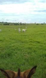 Fazenda Rondônia alvorada do oeste