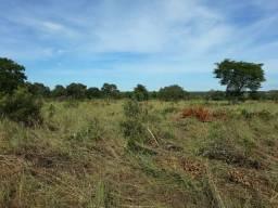 290 há (60 alq) toda formada na área permitida no berço da pecuária centro oeste do TO