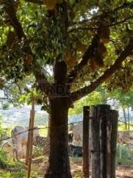 Chácara para alugar em Parque tropical, Araraquara cod:L84148
