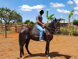 Cavalo Mangolino (troco em Quarto de milha)