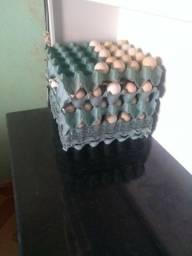 Título do anúncio: vendo ovos caipira ,25,00 reais o pente