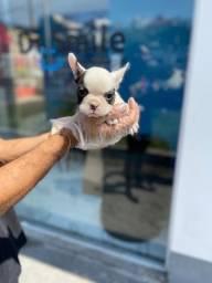 Bulldog Francês bebês (@_@) ///11.9.5600-5535 <whats para infos