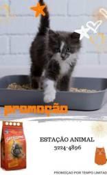 Tudo pro seu gato