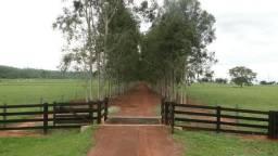 Fazenda Espetacular em Pecuária no Goiás - GO
