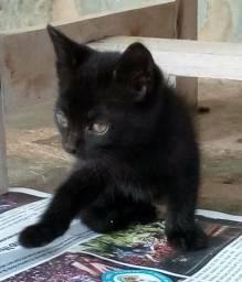 Gatinhos - Doação filhotes gato machos