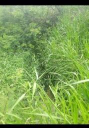 Otima Fazenda com 170 Hectares em Pureza só terra