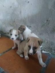Cachorro par doação 5 macho e uma fêmea