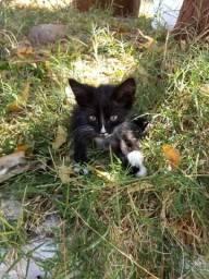 Adoção gatinhos bebês