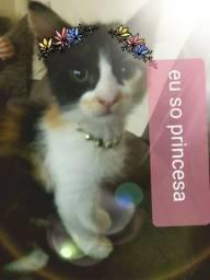 Adoção consciente linda gatinha 4 cores  com 4 meses