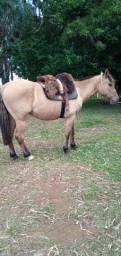 Cavalo de laço