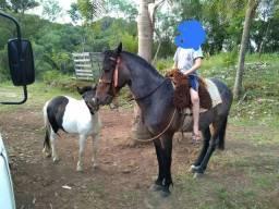 Vendese cavalo crioulo puro