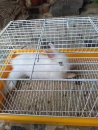 Título do anúncio: Vendo mini coelho com gaiola