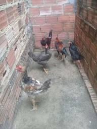 Título do anúncio: Vendo 2 galinhas e 3 frangos caipiras por 150 reais.