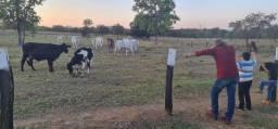 Título do anúncio: Contrato vaqueiro, caseiro