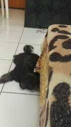 Cachorrinha poodle preta