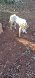 Cão pra caça