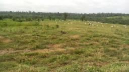 Fazenda em Pecuária no Sul do Para - PA