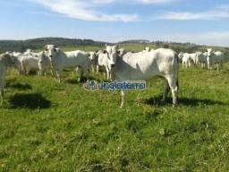 Fazenda à venda, 50 Alq. por R$ 5.000.000 - Sapopema - Sapopema/PR