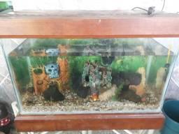Vendo aquario com os acessorios