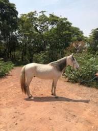 Título do anúncio: Cavalo manga larga marchador